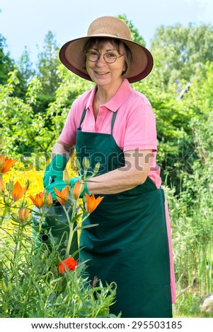 Happy elderly female gardener in a straw sunhat and apron standing watering her flowers in the garden with a watering can with a smile of enjoyment - stock photo