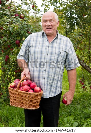 Happy elderly man with   basket  full of apples