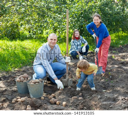 Happy family harvesting potatoes in vegetables garden - stock photo
