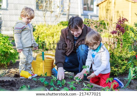 Happy family of three: Two little kid boys and dad planting seeds and seedlings in vegetable garden, outdoors - stock photo