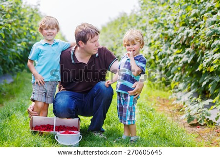 Happy family of three: Young father and two little sons on organic raspberry farm in summer, picking berries. Healthy food and snack in summer.
