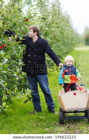 Happy family of two: young father and adorable little child picking organic apples in an orchard, outdoors. - stock photo