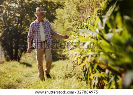 Happy farmer in the field walking and checking corn plants - stock photo