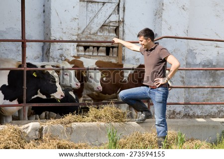 Happy farmer standing beside young bulls on cattle farm - stock photo