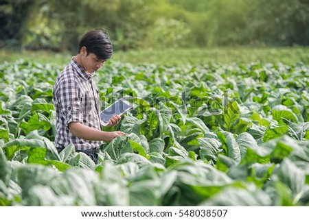 Happy Farmers Using Digital Tablet In The Cultivation Of Tobacco Modern Technology Application Agricultural