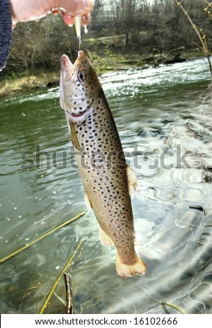 happy fisherman caught trout, big fish - stock photo