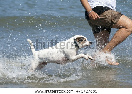 Happy funny dog run in the sea