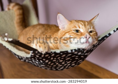 Happy ginger cat lying in a fur hammock - stock photo