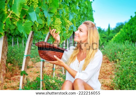 Happy girl on grape field, woman gardener sitting on the ground and picking grape bunches into the hat, organic food, enjoying great harvest, wine making - stock photo