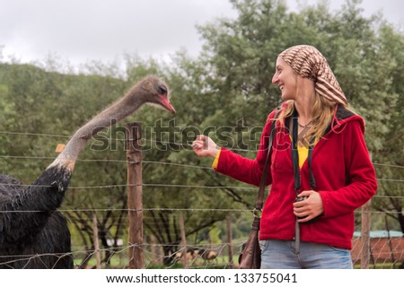 Happy girl plays with ostrich. Shot in a game lodge near Oudtshoorn, Western Cape, South Africa. - stock photo