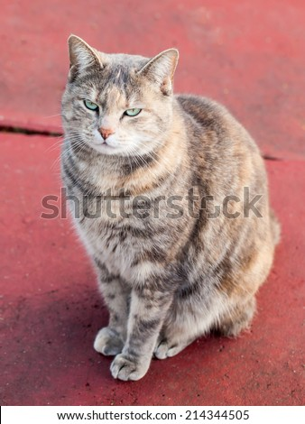 Happy grey and ginger tortoiseshell tabby cat with green eyes sitting calmly on red painted concrete making eye contact