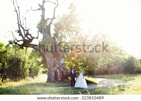 Happy handsome groom and  beautiful elegant blonde bride holding hands in the field with tree and sunshine in background
