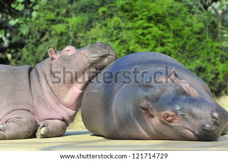 Happy hippopotamus friends - stock photo
