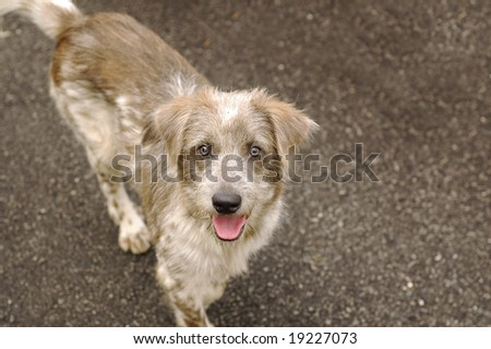 Happy Homeless Dog - stock photo