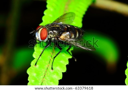 happy insect - stock photo