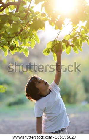 Happy kid outdoors in nature having good time picking the tree (retro style sunset time) - stock photo