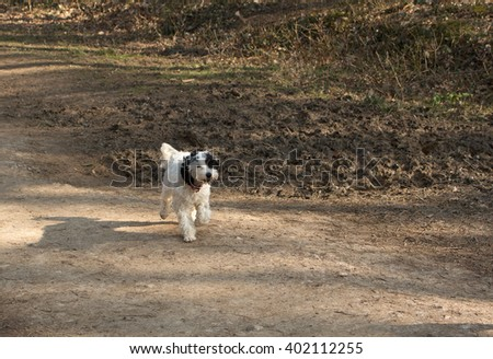 Happy little dog running free down a woodland path