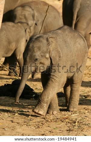 Happy little elephant - stock photo
