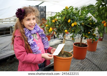 Happy little girl standing next to a small tree citrus cumquat in the greenhouse  - stock photo