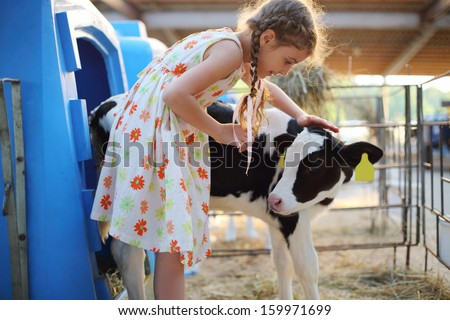 Happy little girlcaresses small calf at cow farm at summer day. - stock photo