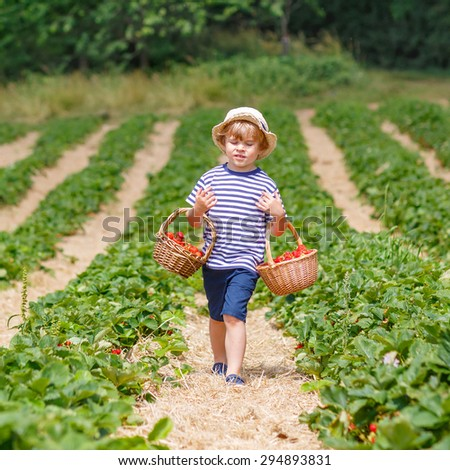 Happy little kid boy picking  strawberries and laughing on organic farm in summer, on warm sunny day. Harvest fields in Germany. Healthy food for children. - stock photo