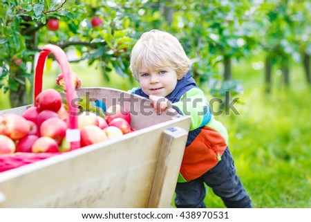 Happy little kid boy with picking and eating red apples on fruit farm, outdoors. Child having fun with gardening and harvesting. Lifestyle, organic food, childhood concept. - stock photo