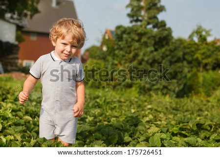 Happy little toddler boy on pick a berry organic strawberry farm - stock photo