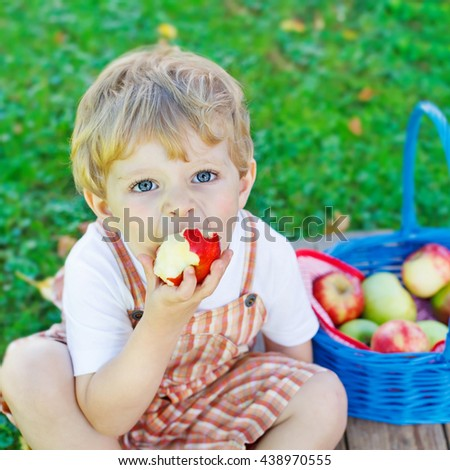 Happy little toddler boy with big blue basket picking and eating red apples in fruit orchard, outdoors. Child having fun with gardening and harvesting. Lifestyle, organic food, family concept. - stock photo
