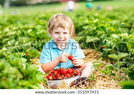 happy little toddler kid boy picking and eating strawberries on organic pick a berry farm in