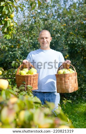 Happy man gathers apples in the garden - stock photo