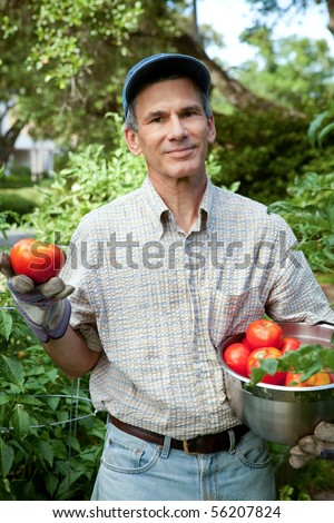 Happy man in his urban garden holding just picked ripe tomatoes. - stock photo