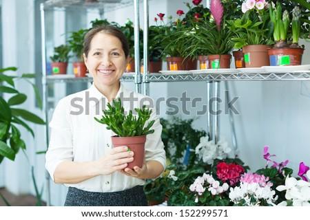 Happy mature woman looks Crassula plant at flower store  - stock photo