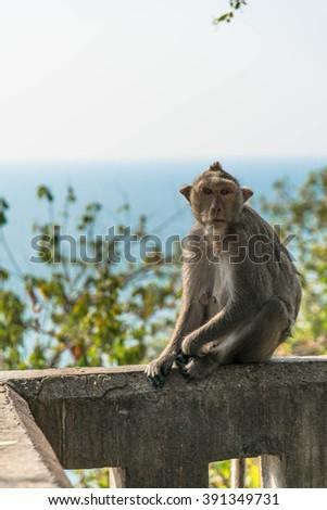 Happy Monkey - stock photo