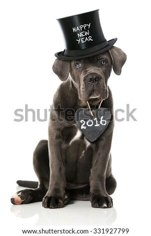 Happy new year dog - stock photo