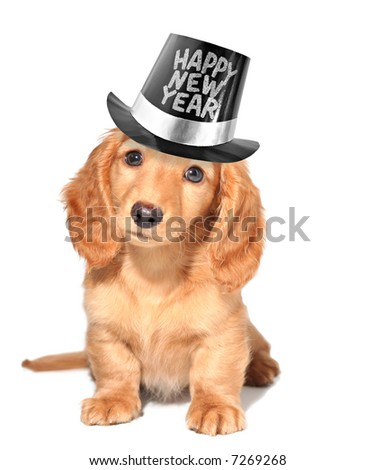 Happy new year's puppy. - stock photo