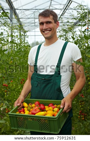 Happy organic farmer carrying tomatoes in a greenhouse - stock photo