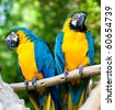 happy parrots - stock photo
