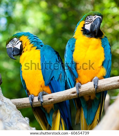 happy parrots - stock photo