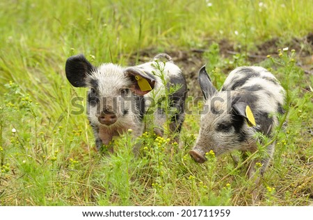 Happy pig surrounded by green grass - stock photo
