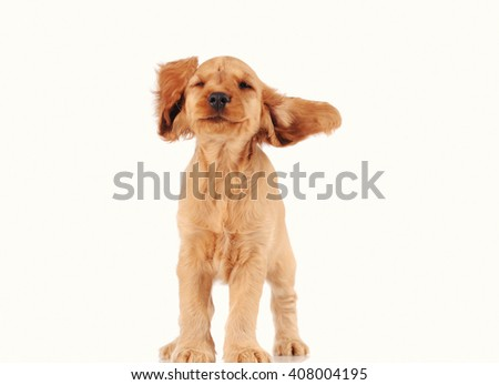 Happy puppy dog isolated over white background