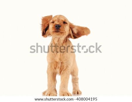 Happy puppy dog isolated over white background - stock photo