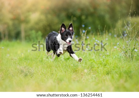happy puppy running through a meadow - stock photo