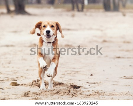 Happy running dog portrait - stock photo