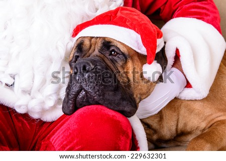 happy Santa Claus with dog closeup - stock photo