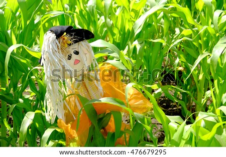 Happy scarecrow in a corn field.