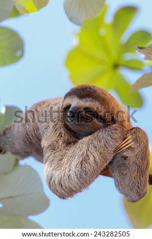 Happy sloth - stock photo