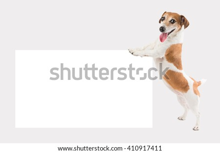 Happy small dog holding pushing white empty paper board (placard, poster, plate ) template mockup for your ad offers information. Gray ( grey ) background
