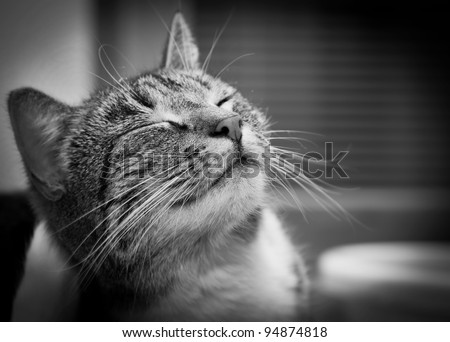 Happy smiling cat portrait in black and white - stock photo