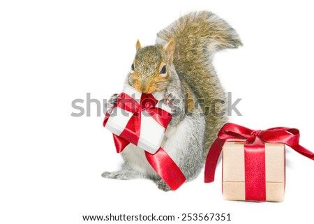 Happy squirrel and gift boxes on white background  - stock photo