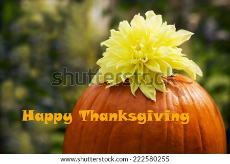 Happy Thanksgiving Orange pumpkin with  yellow dahlia flower on green background - stock photo